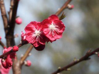 Natuur gaat open. Ontbloeseming van kleuren. Het oog verlustigt... . . #haiku #lensopen #woordengedicht #naardeknoppen #ontbloeseming #lente #lentebeelden #lentebloemen #lentebloesem #sprekendekleuren #natuurfotograaf #amateurdichter #natuurfotografie ##camper_no_mad